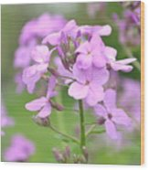 Purple Wildflowers Two Wood Print