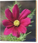 Purple Wood Aster  Wood Print