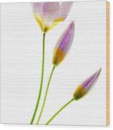 Purple Yellow Tulips 3 Wood Print