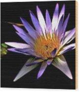 Purple Zen Wood Print