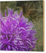Purple Zinnia Wood Print