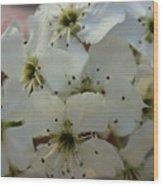 Purpleleaf Sand Cherry Blossoms Wood Print
