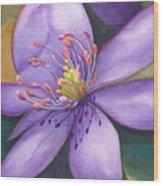 Purple's Passion Wood Print
