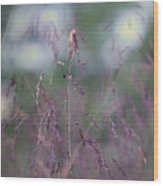 Purpletop, Tridens Flavus, A Native Grass Species, East Coast, United States. Wood Print