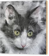 A Cat With Green Eyes Wood Print