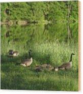 Quack Quack Quack Goes The Geese Wood Print