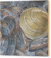 Quahog On Clams Wood Print
