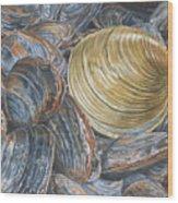 Quahog On Clams Wood Print