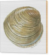 Quahog Shell Wood Print