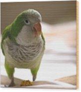 Quaker Parrot Wood Print by Mark Platt