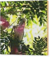 Quaker Parrot With Mimosa Flower Wood Print