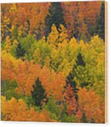 Quaking Aspen And Ponderosa Pine Trees Wood Print