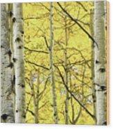 Quaking Aspen Fall Wood Print