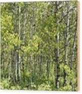 Quaking Aspens 2 Wood Print