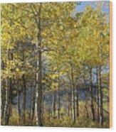 Quaking Aspens Wood Print