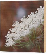 Queen Anne's Lace 3 Wood Print