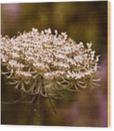 Queen Anne's Lace 4 Wood Print