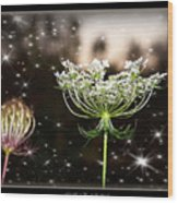 Queen Annes Lace And Sparkles At Dusk Wood Print