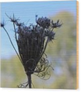 Queen Annes Lace In Autumn Wood Print