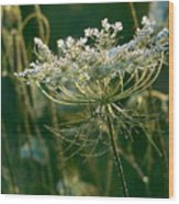 Queen Anne's Lace In Green Horizontal Wood Print