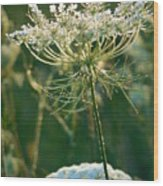 Queen Anne's Lace In Green Vertical Wood Print
