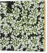 Queen Anne's Lace Patterns Wood Print