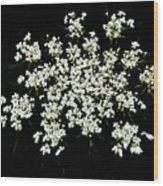 Queen Anne's Lace Wildflower - Daucus Carota Wood Print