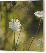 Queen Annes Waving Wood Print