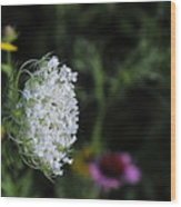 Queen Anns Lace Wood Print