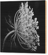 Queen Ann's Lace Side Wood Print