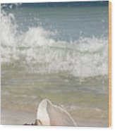 Queen Conch On The Beach Wood Print