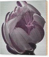 Queen Of The Night In Bloom Wood Print