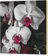 Queen Orchid Wood Print