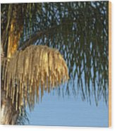 Queen Palm Tree Flower Wood Print