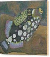Queen Trigger Fish Wood Print