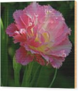 Queensland Tulip Wood Print