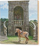 Quelven Village Square, Awaiting His Owner, Brittany, France Wood Print