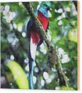 Quetzal In Monteverde Wood Print