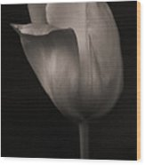 Quiet Beauty Wood Print