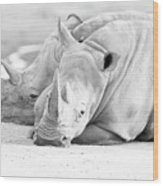 Rhino Quiet Moment Wood Print