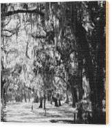 Quiet Walk Wood Print