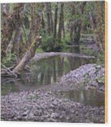 Quinault Rain Forest 3147 Wood Print