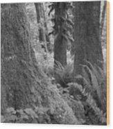 Quinault Rain Forest 3152 Wood Print