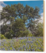 Quintessential Texas Hill Country County Road Bluebonnets And Oak - Llano Wood Print