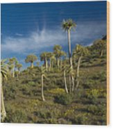 Quiver Tree Forest Wood Print