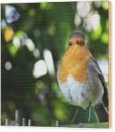 Quizzical Robin Wood Print
