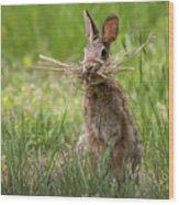 Rabbit Collector Square Wood Print