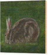 Rabbit In Spring Wood Print