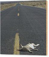Rabbit Road Kill Wood Print