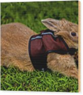 Rabbit With Vest Wood Print
